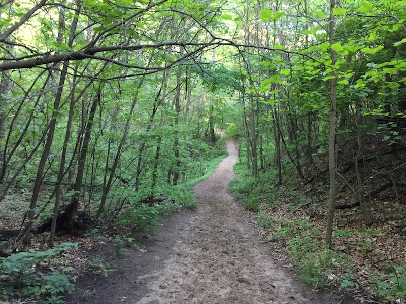 On Trail # 7 at Indiana Dunes State Park, Indiana